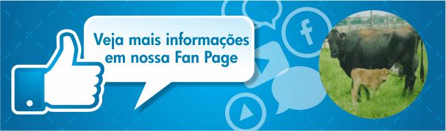 Facebook Fazenda Cosme e Damião
