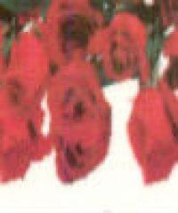 Floricultura Rosa de Sarom